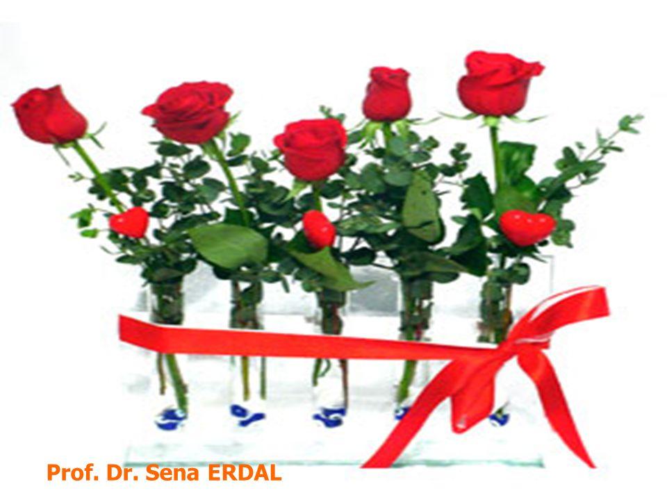 Prof. Dr. Sena ERDAL