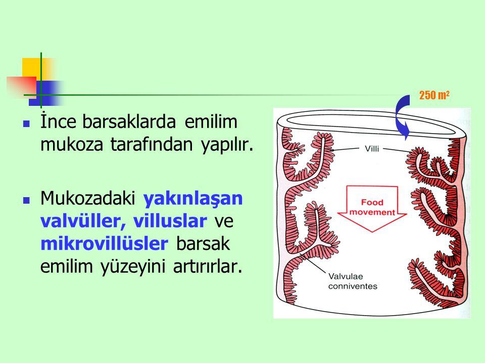 İnce barsaklarda emilim mukoza tarafından yapılır. Mukozadaki yakınlaşan valvüller, villuslar ve mikrovillüsler barsak emilim yüzeyini artırırlar. 250