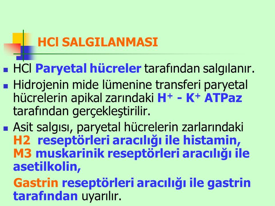 HCl SALGILANMASI HCl Paryetal hücreler tarafından salgılanır. Hidrojenin mide lümenine transferi paryetal hücrelerin apikal zarındaki H + - K + ATPaz