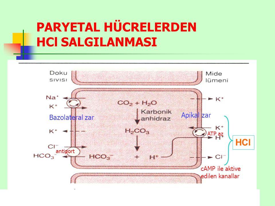 antiport PARYETAL HÜCRELERDEN HCl SALGILANMASI cAMP ile aktive edilen kanallar Apikal zar Bazolateral zar ATP az HCl
