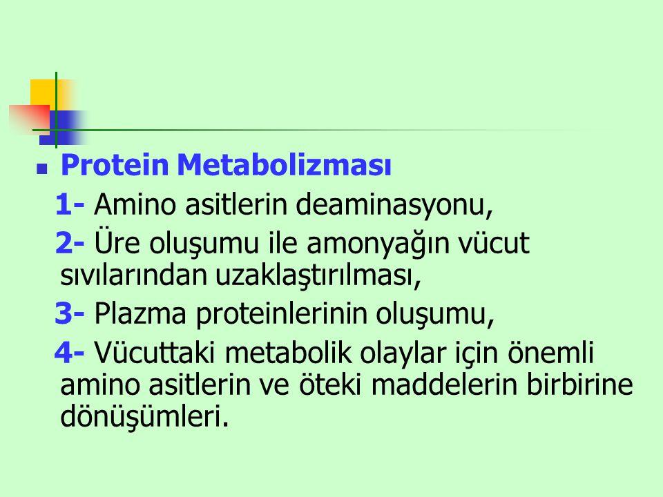 Protein Metabolizması 1- Amino asitlerin deaminasyonu, 2- Üre oluşumu ile amonyağın vücut sıvılarından uzaklaştırılması, 3- Plazma proteinlerinin oluş