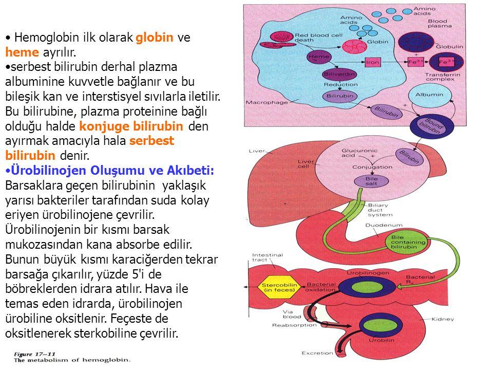 Hemoglobin ilk olarak globin ve heme ayrılır. serbest bilirubin derhal plazma albuminine kuvvetle bağlanır ve bu bileşik kan ve interstisyel sıvılarla