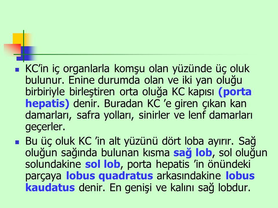 KC'in iç organlarla komşu olan yüzünde üç oluk bulunur. Enine durumda olan ve iki yan oluğu birbiriyle birleştiren orta oluğa KC kapısı (porta hepatis