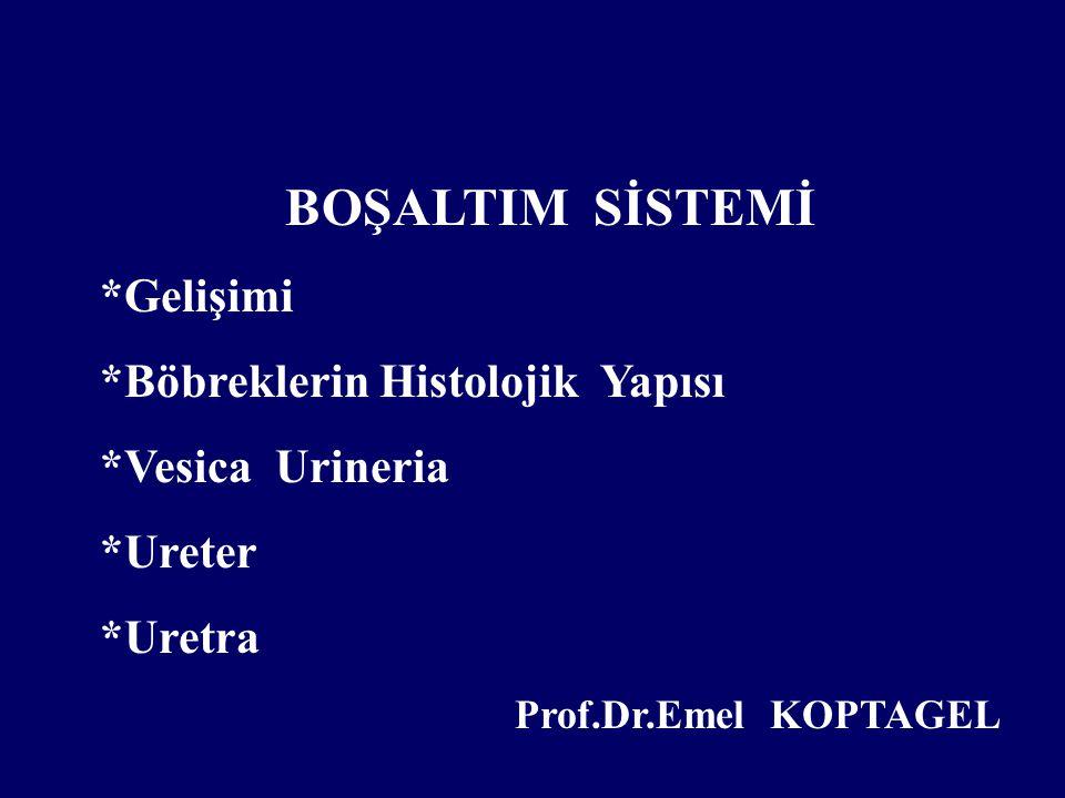 BOŞALTIM SİSTEMİ *Gelişimi *Böbreklerin Histolojik Yapısı *Vesica Urineria *Ureter *Uretra Prof.Dr.Emel KOPTAGEL