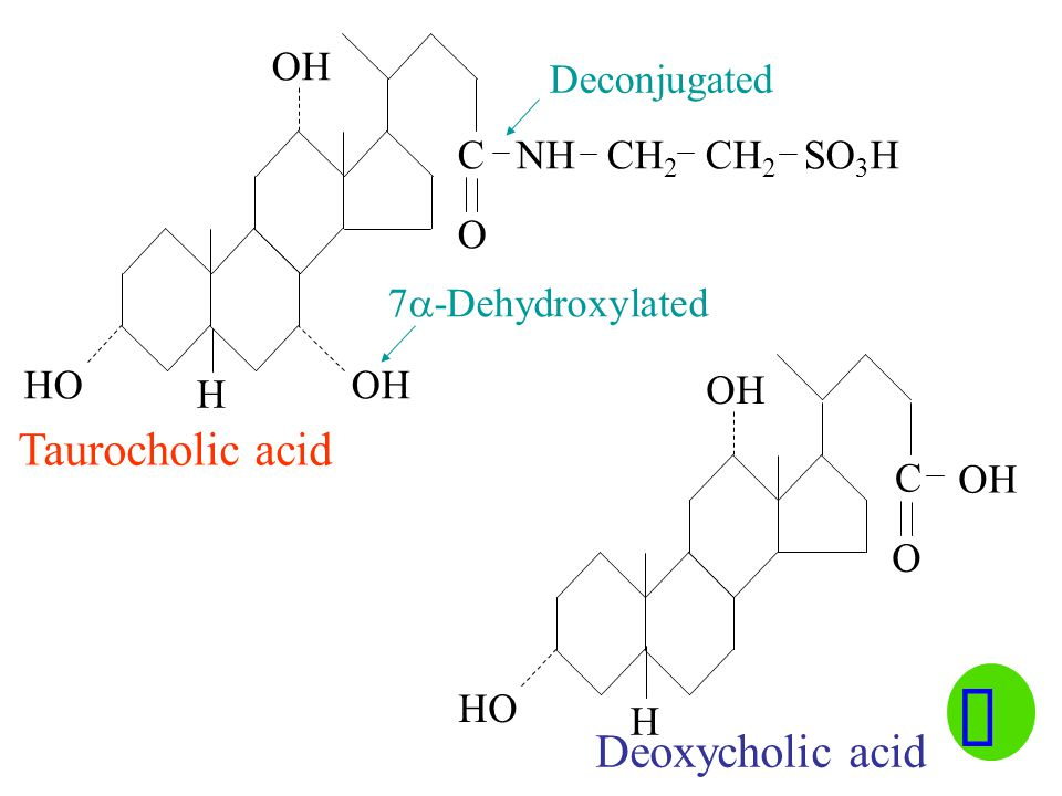 HO C NH CH 2 CH 2 SO 3 H OH O HO OH O C Deconjugated 7  -Dehydroxylated Taurocholic acid Deoxycholic acid H H