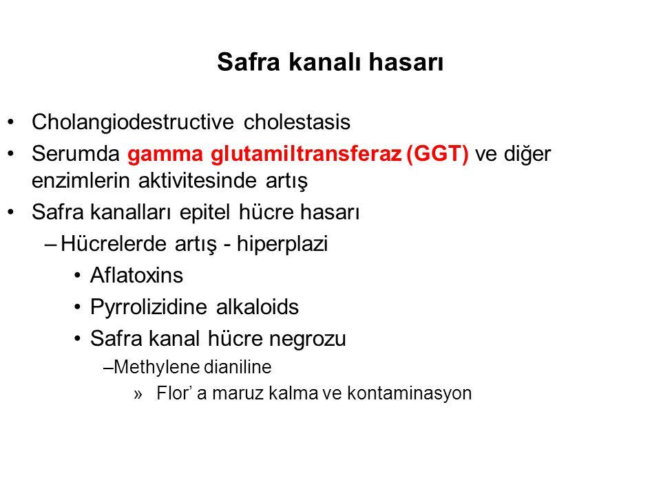 Safra kanalı hasarı Cholangiodestructive cholestasis Serumda gamma glutamiltransferaz (GGT) ve diğer enzimlerin aktivitesinde artış Safra kanalları ep