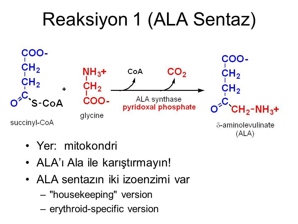 Reaksiyon 1 (ALA Sentaz) Yer: mitokondri ALA'ı Ala ile karıştırmayın! ALA sentazın iki izoenzimi var –