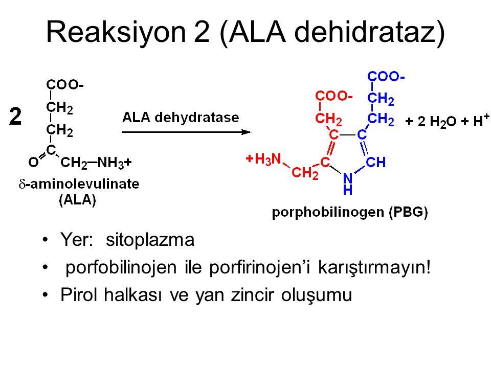 Reaksiyon 2 (ALA dehidrataz) Yer: sitoplazma porfobilinojen ile porfirinojen'i karıştırmayın! Pirol halkası ve yan zincir oluşumu