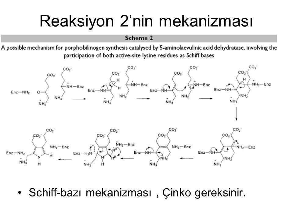 Reaksiyon 2'nin mekanizması Schiff-bazı mekanizması, Çinko gereksinir.