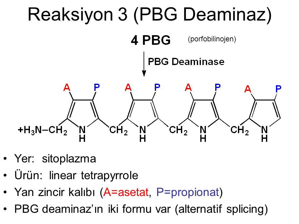 Reaksiyon 3 (PBG Deaminaz) Yer: sitoplazma Ürün: linear tetrapyrrole Yan zincir kalıbı (A=asetat, P=propionat) PBG deaminaz'ın iki formu var (alternat