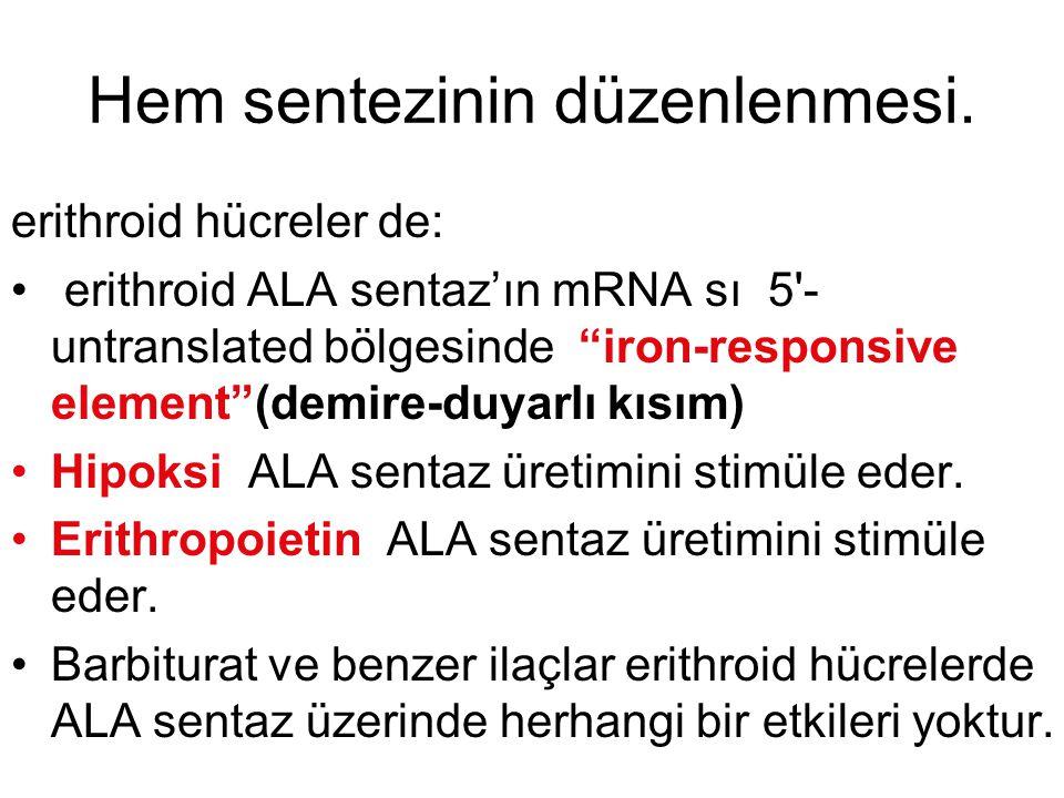 """Hem sentezinin düzenlenmesi. erithroid hücreler de: erithroid ALA sentaz'ın mRNA sı 5'- untranslated bölgesinde """"iron-responsive element""""(demire-duyar"""