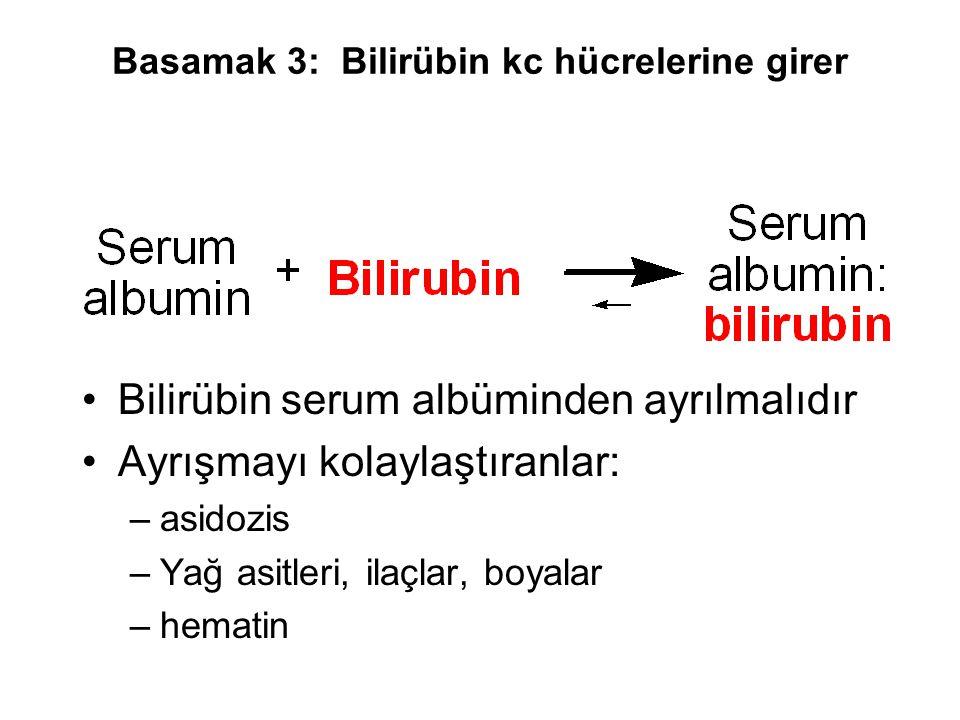Basamak 3: Bilirübin kc hücrelerine girer Bilirübin serum albüminden ayrılmalıdır Ayrışmayı kolaylaştıranlar: –asidozis –Yağ asitleri, ilaçlar, boyala