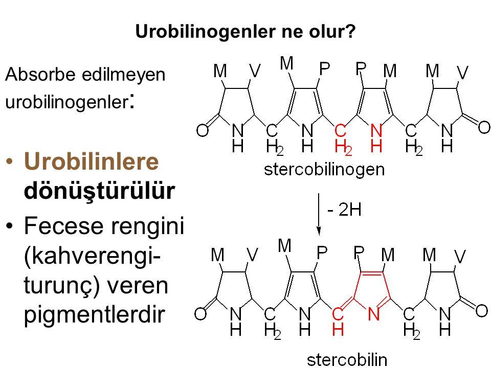 Urobilinogenler ne olur? Urobilinlere dönüştürülür Fecese rengini (kahverengi- turunç) veren pigmentlerdir Absorbe edilmeyen urobilinogenler :