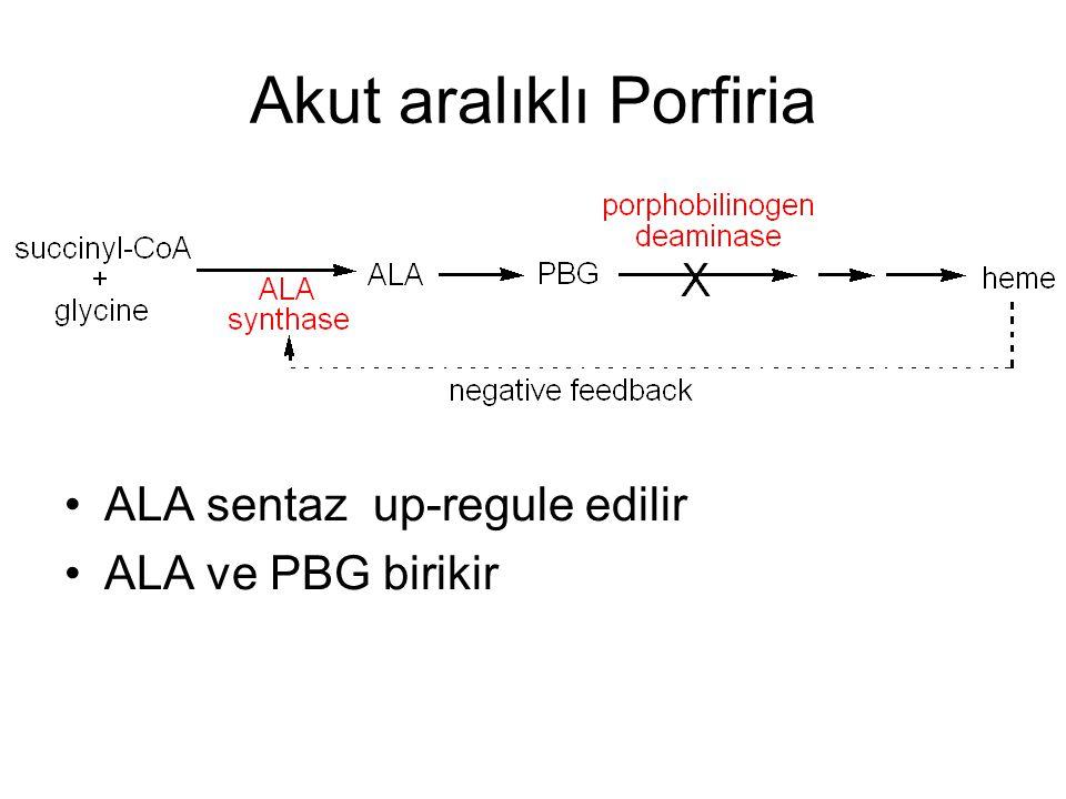 Akut aralıklı Porfiria ALA sentaz up-regule edilir ALA ve PBG birikir