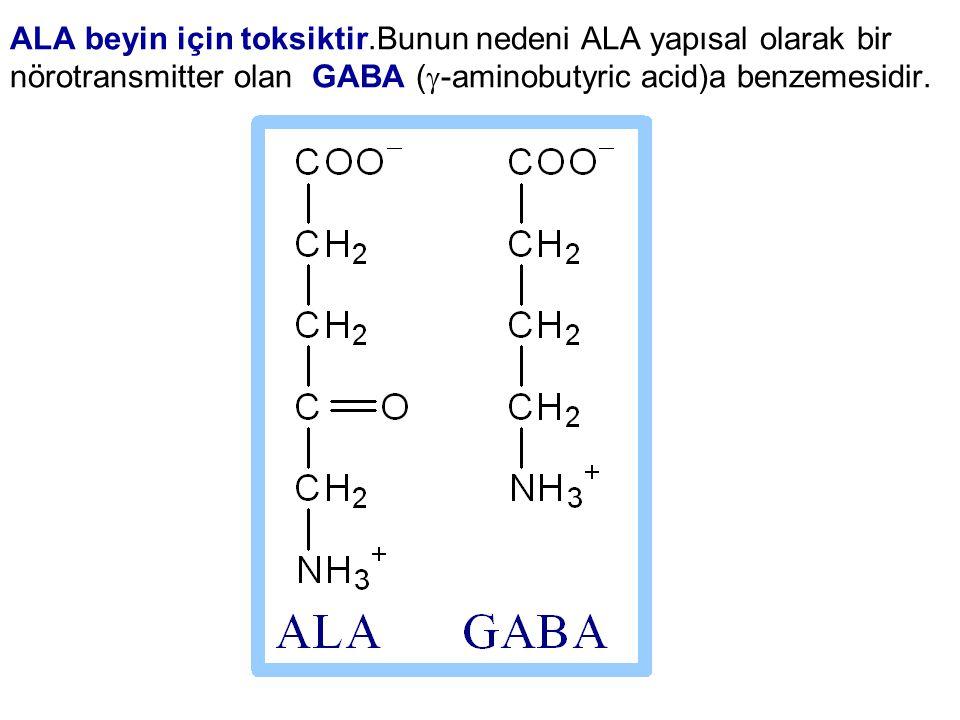 ALA beyin için toksiktir.Bunun nedeni ALA yapısal olarak bir nörotransmitter olan GABA (  -aminobutyric acid)a benzemesidir.