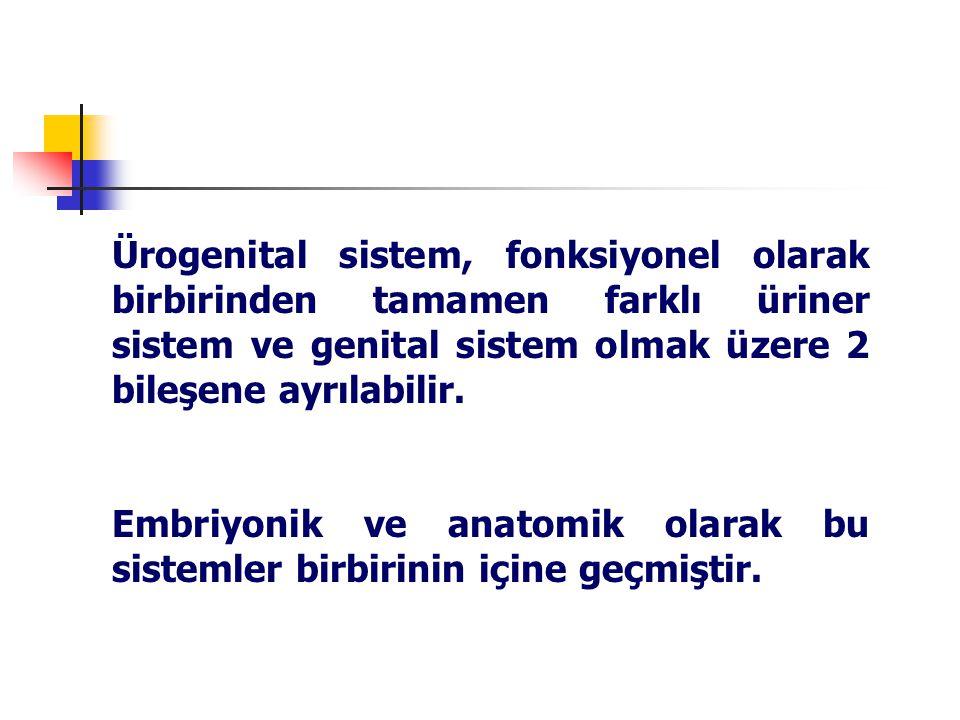 Ürogenital sistem, fonksiyonel olarak birbirinden tamamen farklı üriner sistem ve genital sistem olmak üzere 2 bileşene ayrılabilir.