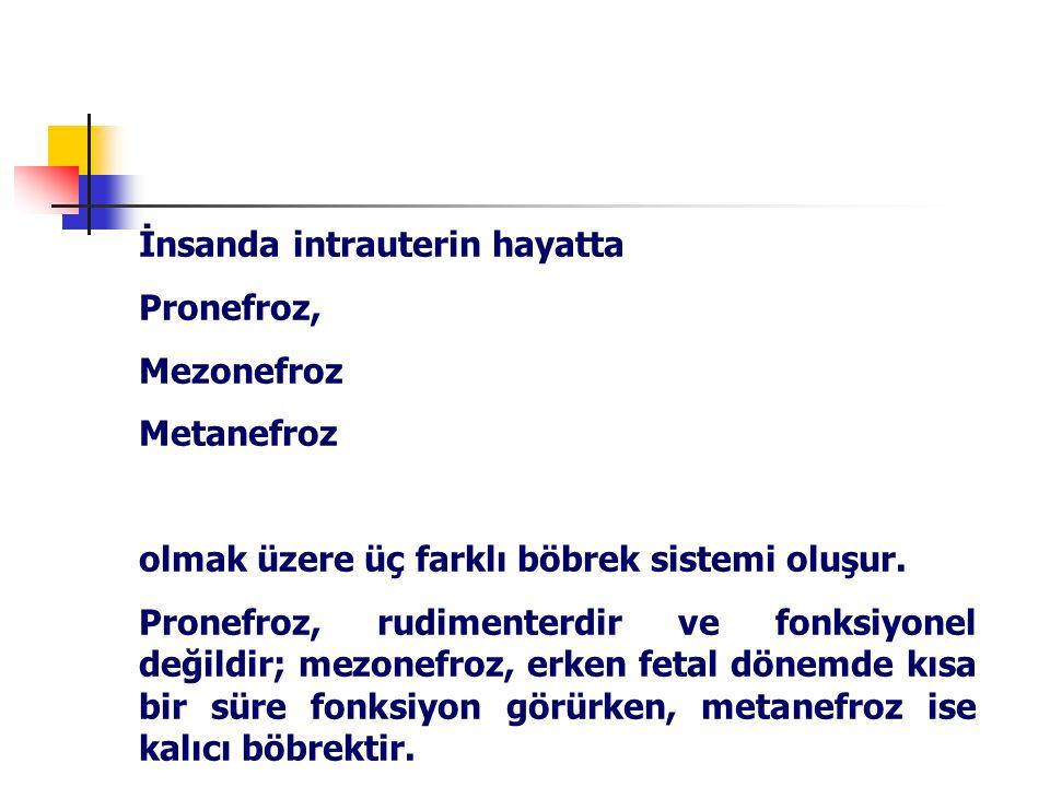 İnsanda intrauterin hayatta Pronefroz, Mezonefroz Metanefroz olmak üzere üç farklı böbrek sistemi oluşur.