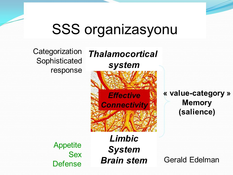 SSS organizasyonu Limbic System Brain stem Thalamocortical system Appetite Sex Defense Categorization Sophisticated response « value-category » Memory