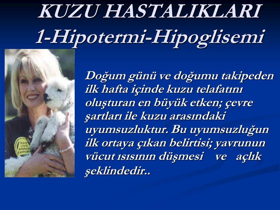 KUZU HASTALIKLARI 1-Hipotermi-Hipoglisemi Doğum günü ve doğumu takipeden ilk hafta içinde kuzu telafatını oluşturan en büyük etken; çevre şartları ile kuzu arasındaki uyumsuzluktur.