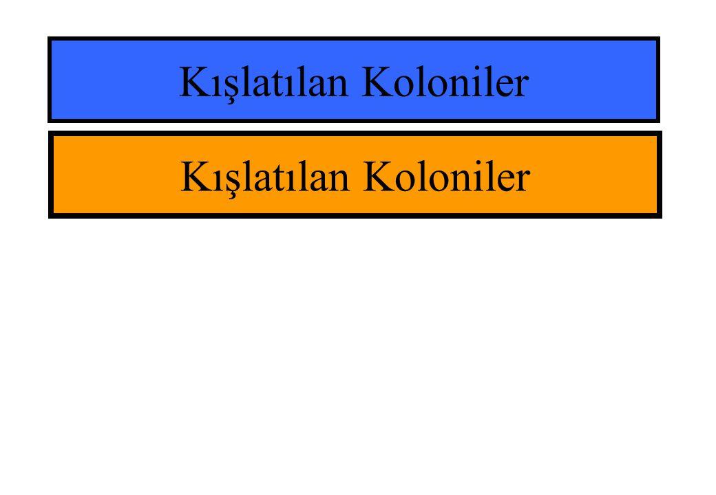 Kışlatılan Koloniler