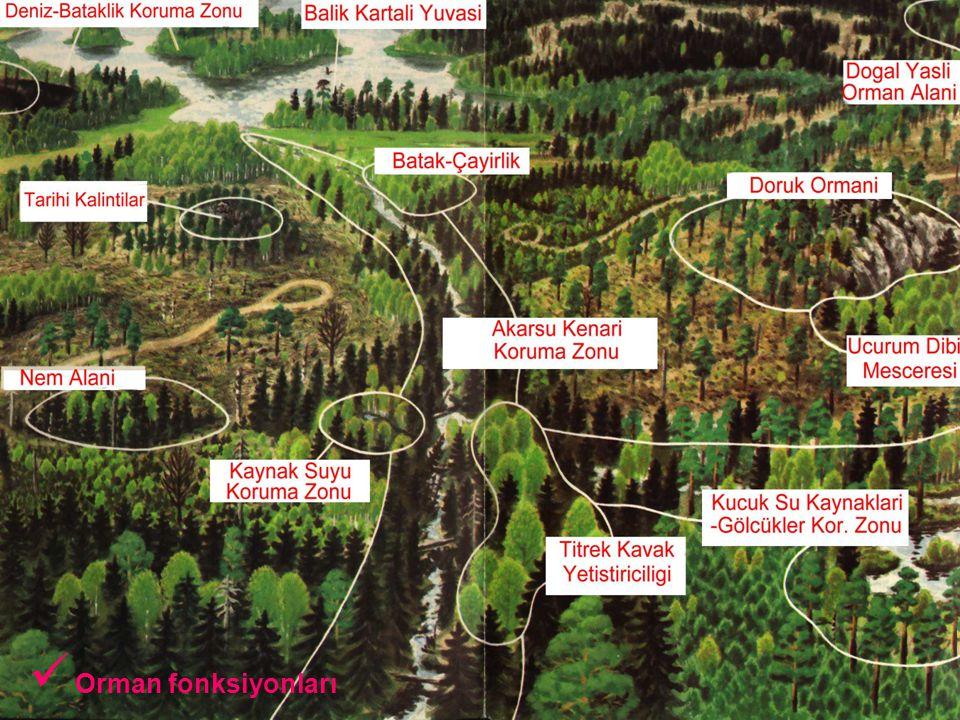 Orman fonksiyonları
