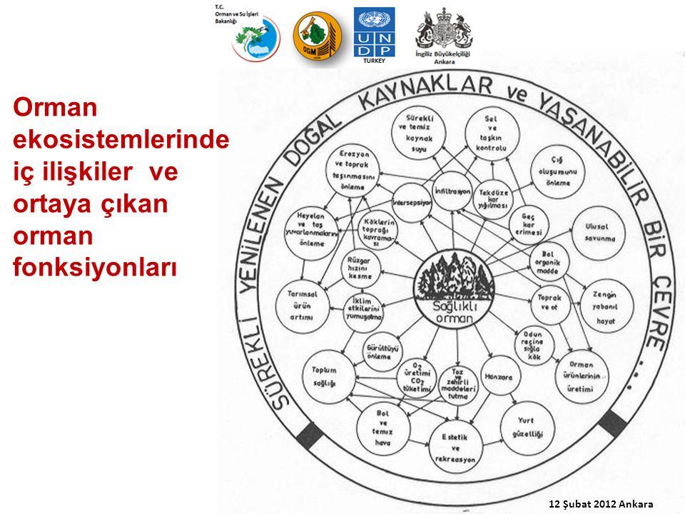 Orman ekosistemlerinde iç ilişkiler ve ortaya çıkan orman fonksiyonları 12 Şubat 2012 Ankara