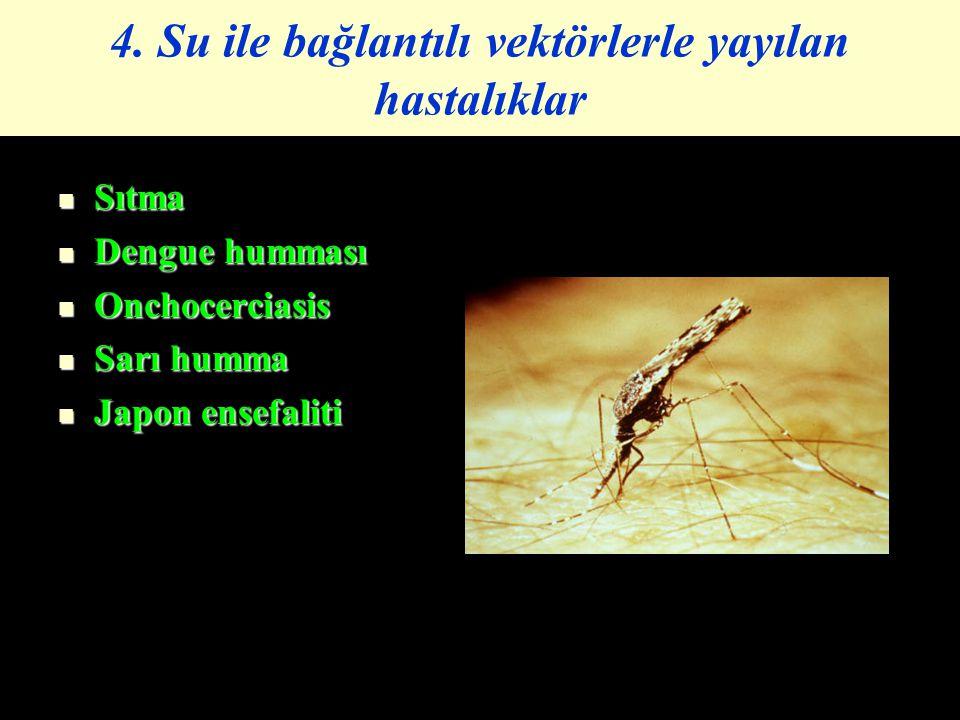 4. Su ile bağlantılı vektörlerle yayılan hastalıklar Sıtma Sıtma Dengue humması Dengue humması Onchocerciasis Onchocerciasis Sarı humma Sarı humma Jap