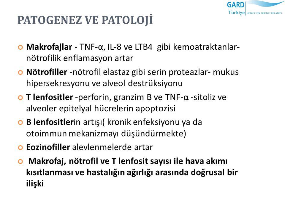 PATOGENEZ VE PATOLOJİ Makrofajlar - TNF-α, IL-8 ve LTB4 gibi kemoatraktanlar- nötrofilik enflamasyon artar Nötrofiller -nötrofil elastaz gibi serin pr