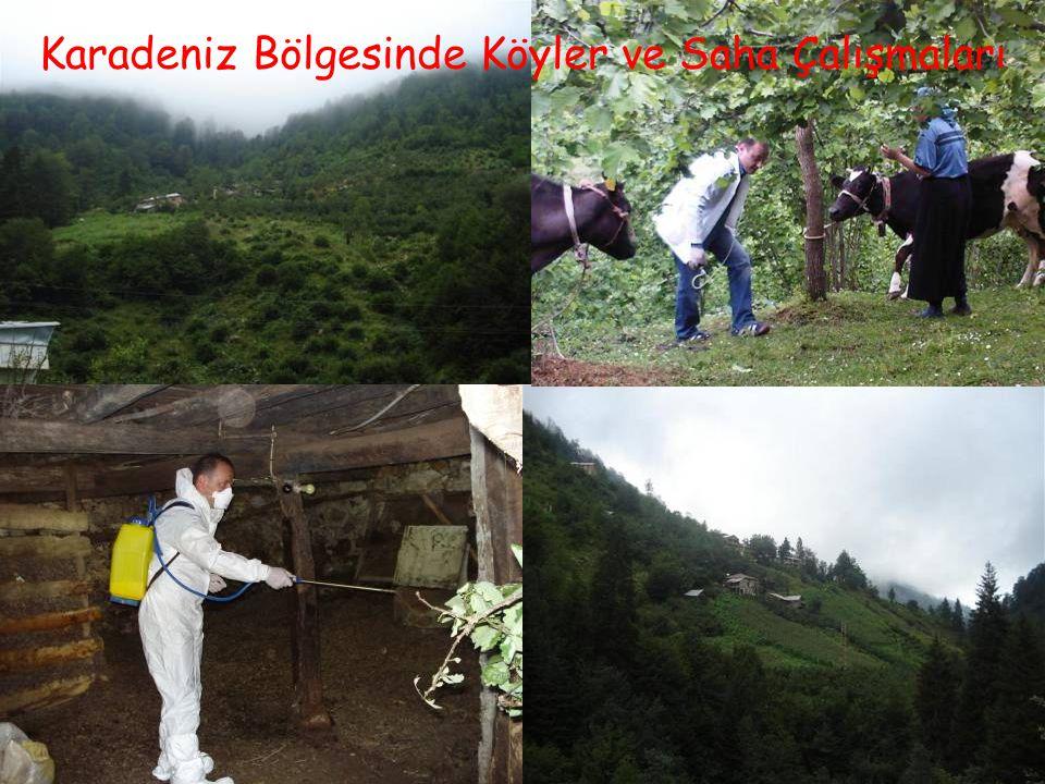 8 Karadeniz Bölgesinde Köyler ve Saha Çalışmaları