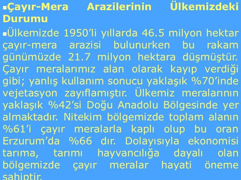 Çayır-Mera Arazilerinin Ülkemizdeki Durumu Ülkemizde 1950'li yıllarda 46.5 milyon hektar çayır-mera arazisi bulunurken bu rakam günümüzde 21.7 milyon