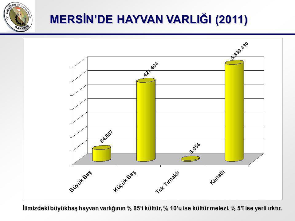 MERSİN'DE HAYVAN VARLIĞI (2011) İlimizdeki büyükbaş hayvan varlığının % 85'i kültür, % 10'u ise kültür melezi, % 5'î ise yerli ırktır.