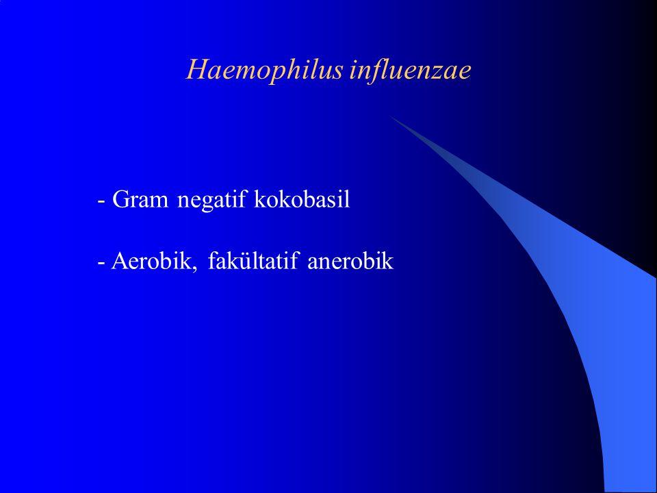 Haemophilus influenzae - Gram negatif kokobasil - Aerobik, fakültatif anerobik