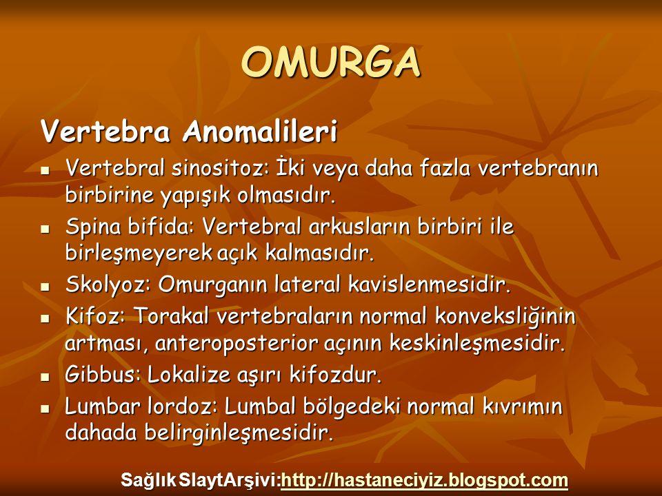 OMURGA Vertebra Anomalileri Vertebral sinositoz: İki veya daha fazla vertebranın birbirine yapışık olmasıdır. Vertebral sinositoz: İki veya daha fazla