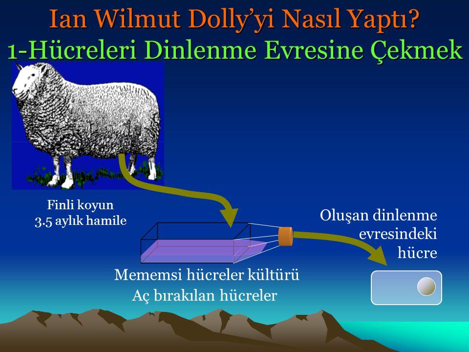 Ian Wilmut Dolly'yi Nasıl Yaptı? 1-Hücreleri Dinlenme Evresine Çekmek Finli koyun 3.5 aylık hamile Mememsi hücreler kültürü Oluşan dinlenme evresindek