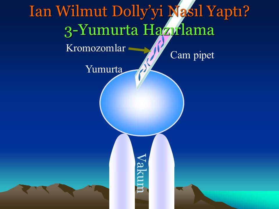 Yumurta Vakum Cam pipet Kromozomlar Ian Wilmut Dolly'yi Nasıl Yaptı? 3-Yumurta Hazırlama