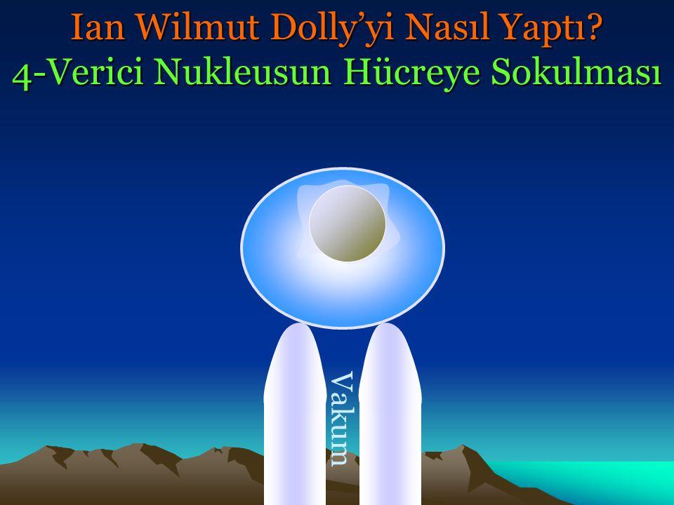 Vakum Ian Wilmut Dolly'yi Nasıl Yaptı? 4-Verici Nukleusun Hücreye Sokulması