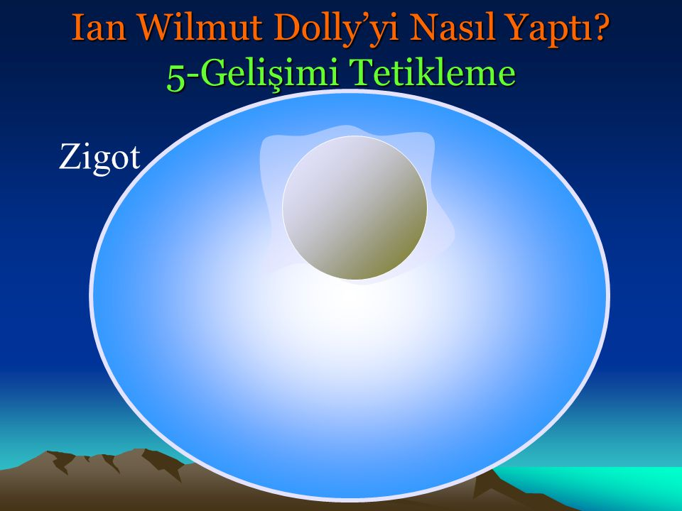 Zigot Ian Wilmut Dolly'yi Nasıl Yaptı? 5-Gelişimi Tetikleme
