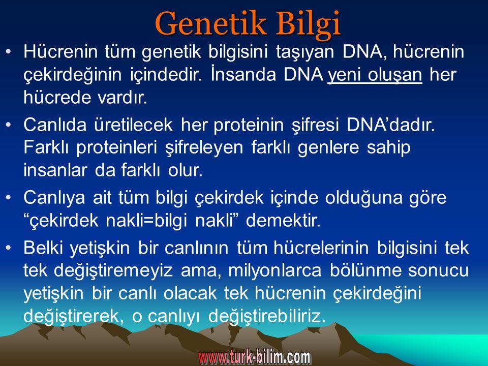 Genetik Bilgi Hücrenin tüm genetik bilgisini taşıyan DNA, hücrenin çekirdeğinin içindedir. İnsanda DNA yeni oluşan her hücrede vardır. Canlıda üretile
