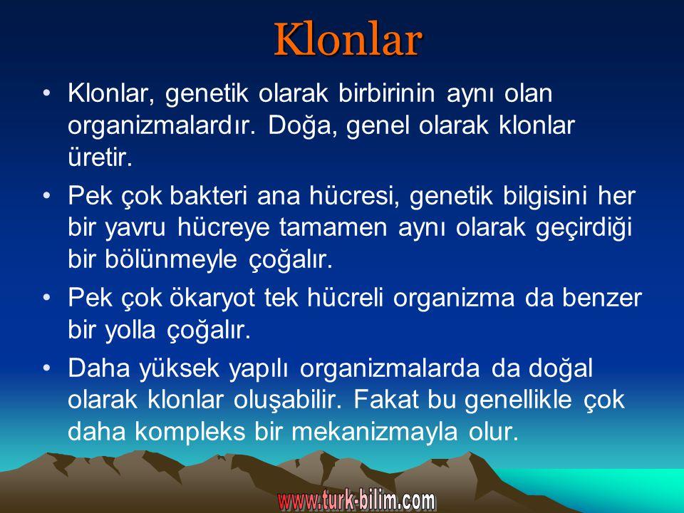 Klonlar Klonlar, genetik olarak birbirinin aynı olan organizmalardır. Doğa, genel olarak klonlar üretir. Pek çok bakteri ana hücresi, genetik bilgisin