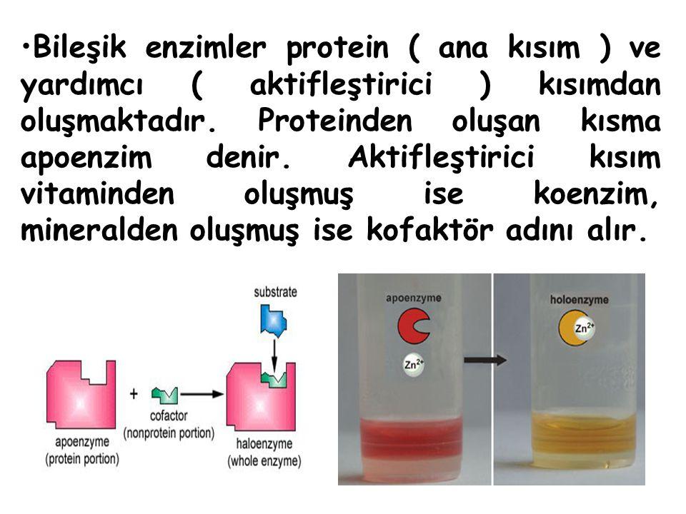Bileşik enzimler protein ( ana kısım ) ve yardımcı ( aktifleştirici ) kısımdan oluşmaktadır. Proteinden oluşan kısma apoenzim denir. Aktifleştirici kı