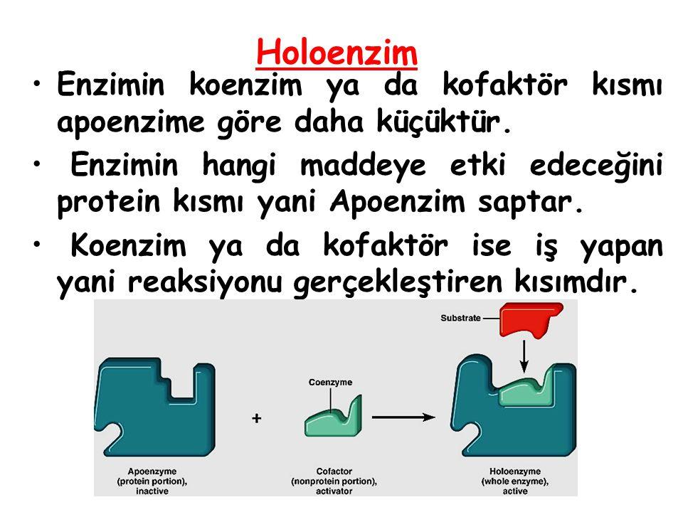 Enzimin koenzim ya da kofaktör kısmı apoenzime göre daha küçüktür. Enzimin hangi maddeye etki edeceğini protein kısmı yani Apoenzim saptar. Koenzim ya