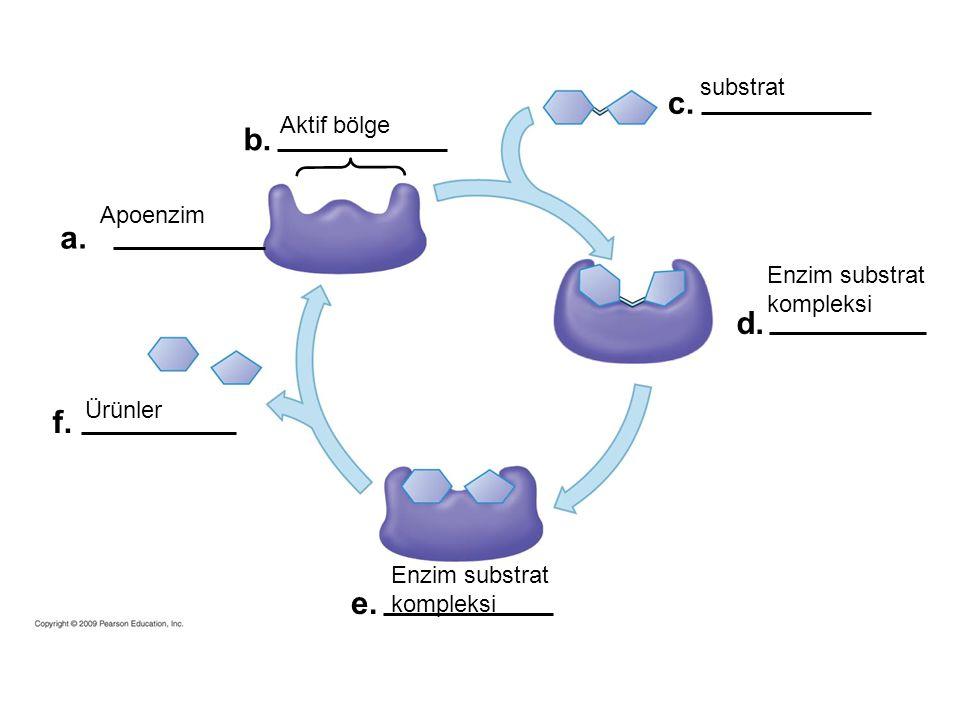 a. b. c. d. e. f. substrat Enzim substrat kompleksi Ürünler Apoenzim Aktif bölge