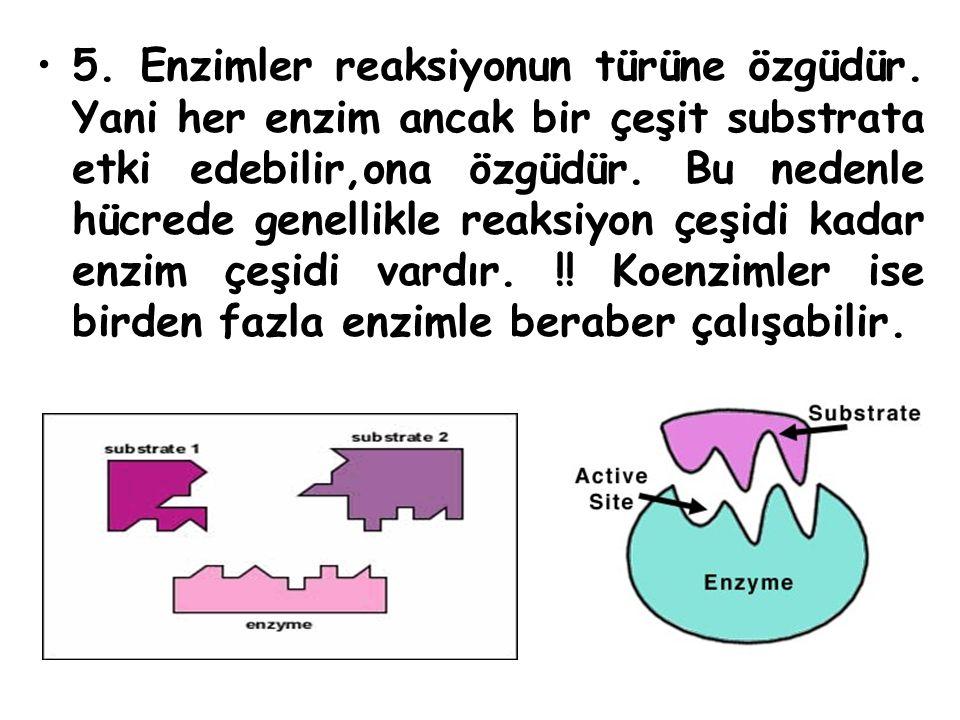 5. Enzimler reaksiyonun türüne özgüdür. Yani her enzim ancak bir çeşit substrata etki edebilir,ona özgüdür. Bu nedenle hücrede genellikle reaksiyon çe