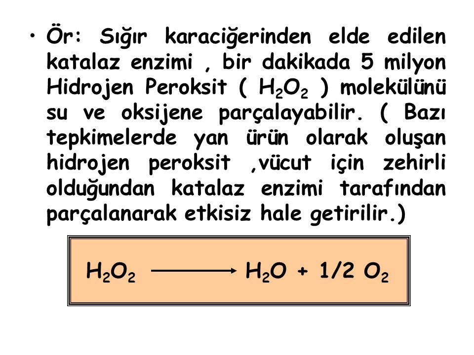 Ör: Sığır karaciğerinden elde edilen katalaz enzimi, bir dakikada 5 milyon Hidrojen Peroksit ( H 2 O 2 ) molekülünü su ve oksijene parçalayabilir. ( B