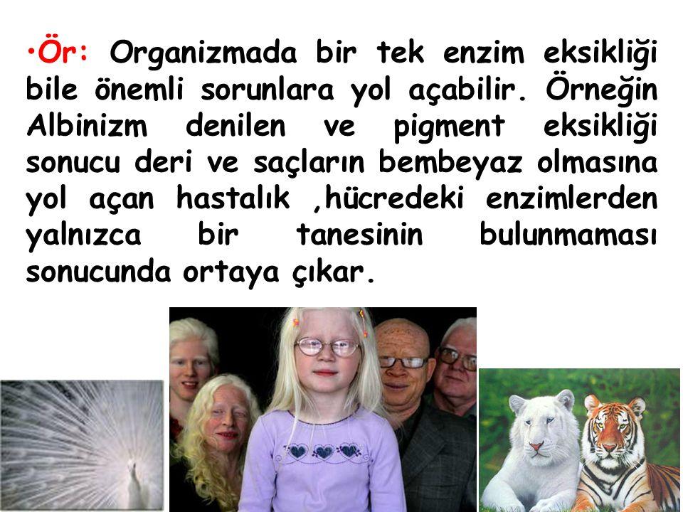 Ör: Organizmada bir tek enzim eksikliği bile önemli sorunlara yol açabilir. Örneğin Albinizm denilen ve pigment eksikliği sonucu deri ve saçların bemb