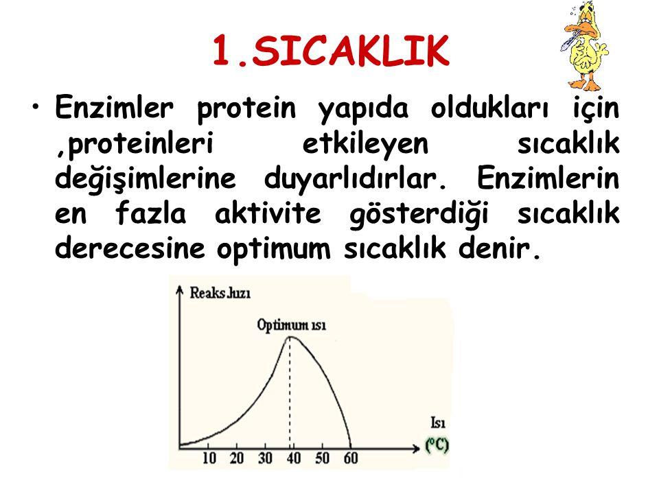 1.SICAKLIK Enzimler protein yapıda oldukları için,proteinleri etkileyen sıcaklık değişimlerine duyarlıdırlar. Enzimlerin en fazla aktivite gösterdiği