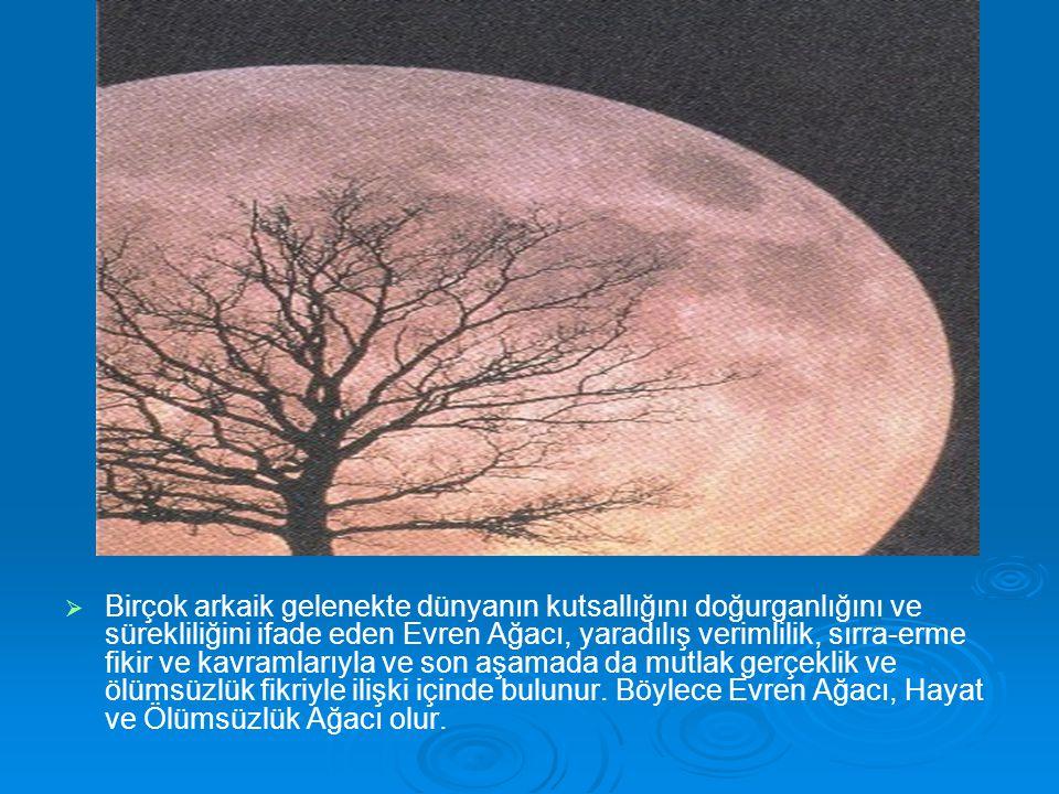   Birçok arkaik gelenekte dünyanın kutsallığını doğurganlığını ve sürekliliğini ifade eden Evren Ağacı, yaradılış verimlilik, sırra-erme fikir ve ka