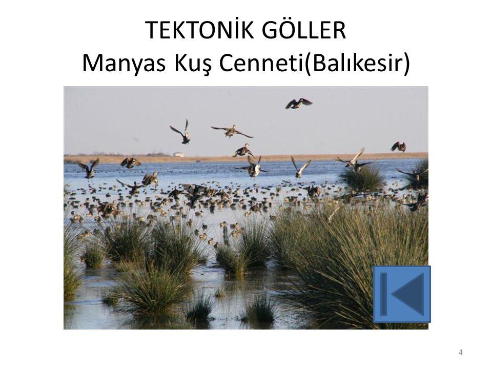 TEKTONİK GÖLLER Manyas Kuş Cenneti(Balıkesir) 4