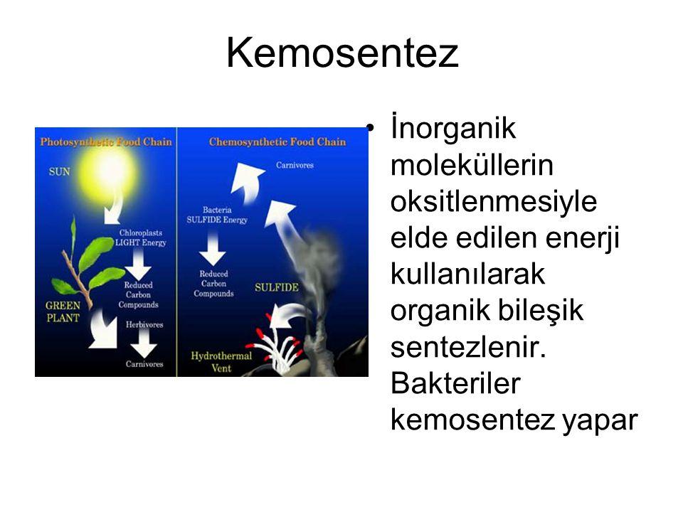 Kemosentez İnorganik moleküllerin oksitlenmesiyle elde edilen enerji kullanılarak organik bileşik sentezlenir. Bakteriler kemosentez yapar