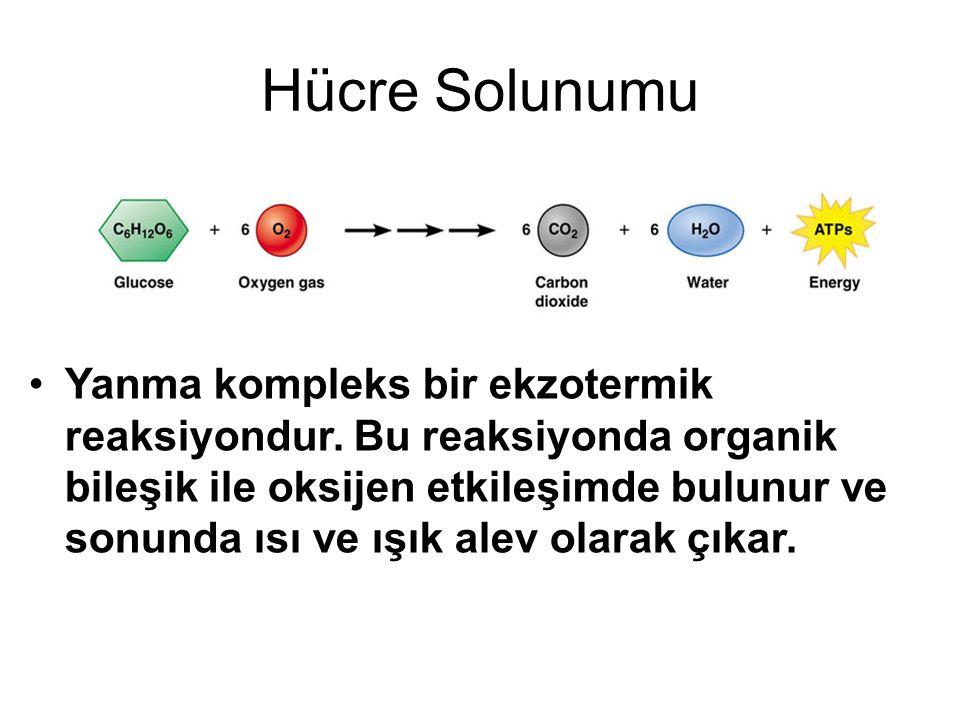 Hücre Solunumu Yanma kompleks bir ekzotermik reaksiyondur. Bu reaksiyonda organik bileşik ile oksijen etkileşimde bulunur ve sonunda ısı ve ışık alev
